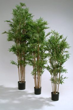 Duo Pack Oriental Bamboo 135cm