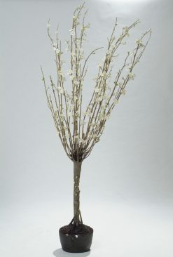Duo Pack Large Apple Blossom Tree 220cm