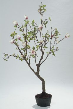 Duo Pack Magnolia Tree 200cm Blush Pink/White