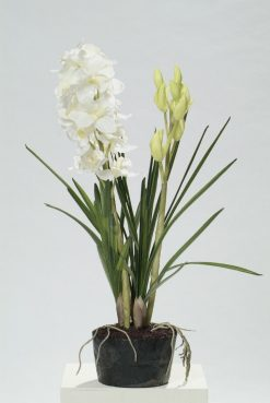 Orchid Cymbidium White in Soil 80cm High Pack of Two