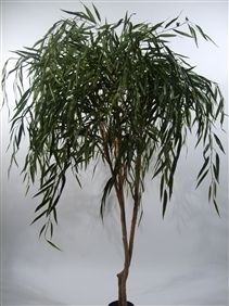 Duo Pack Weeping Willow Tree 170cm Green Leaves