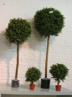 Boxwood Pom Pom Standard Duo Pack 140cm high 1728 leaves