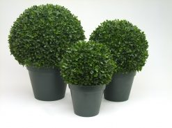 Boxwood Buxus Box Tea Leaf Ball Green Dia 25cm Duo Set