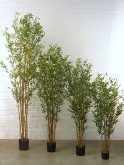 Duo Pack Oriental Bamboo 180cm high