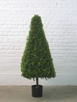 Boxwood Buxus Box Pyramid Duo Pack 110cm