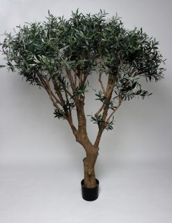 Large Specimen Olive Tree Umbrella 160cm High 6240 Leaves