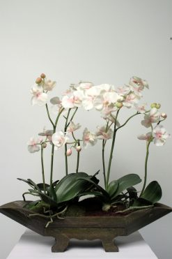 Orchid Phalaenopsis White & Lilac with Wooden Pot