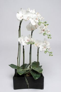 Orchid Phalaenopsis White Potted 60x22cm Pack of two