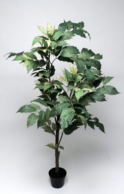 Duo Pack Coffee Tree 130cm Potted Green Leaves