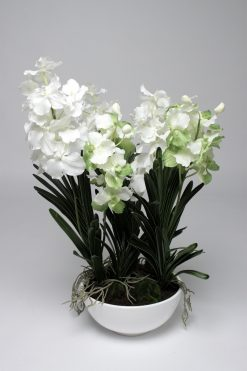 Orchid Vanda White Potted Large