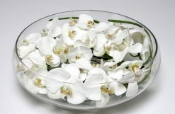 Orchid Phalaenopsis White Large in Glass/Water effect 17cm high 39cm dia