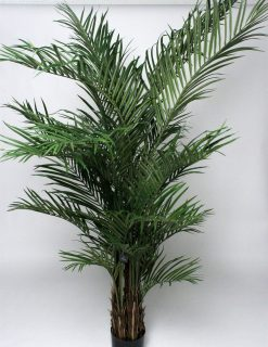 XL Areca Palm Tree 240cm