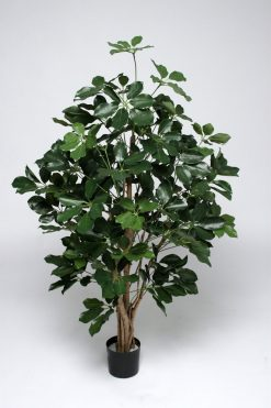 Duo Pack Umbrella Schefflera Tree 120cm each high 504 Green Leaves