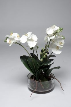 Orchid Phalaenopsis L White in Glass/Water effect 45cm high Pack of two