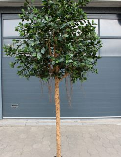 XL Ficus Tree Standard 310cm high 4160 leaves
