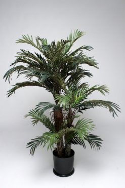 Pair of Phoenix Palm Trees 120cm