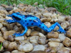 Bronze Sculpture Frog Rain Forest Blue
