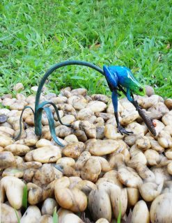 MI 12 Solid Bronze Sculpture Blue Rain Forest Frog 1 | Avant Garden
