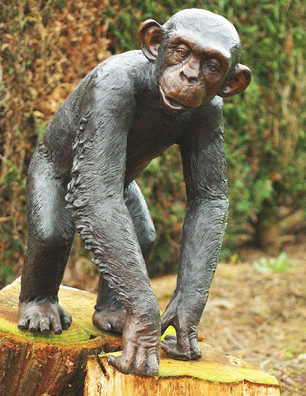 Bronze Sculpture Chimpanzee 77cm