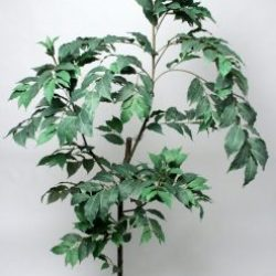 Duo Pack Coffee Tree 203cm Potted Green Leaves